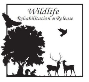 Wildlife Rehabilitation & Release