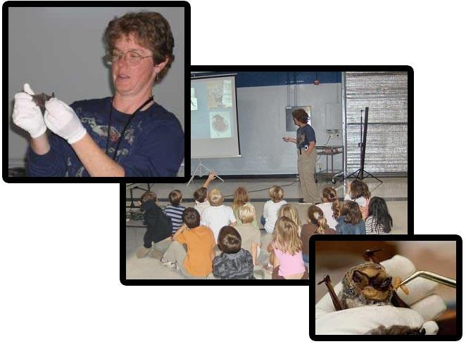 NorCal Bats Lecture